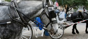 New York Carriage Horses